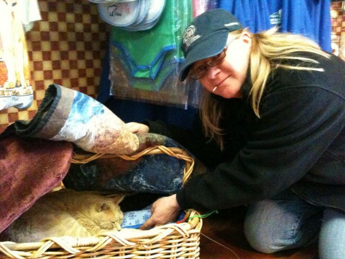 O prefeito da cidade de Talkeetna, no Alasca, é um gatinho 01