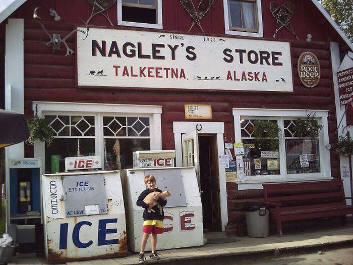 O prefeito da cidade de Talkeetna, no Alasca, é um gatinho 02