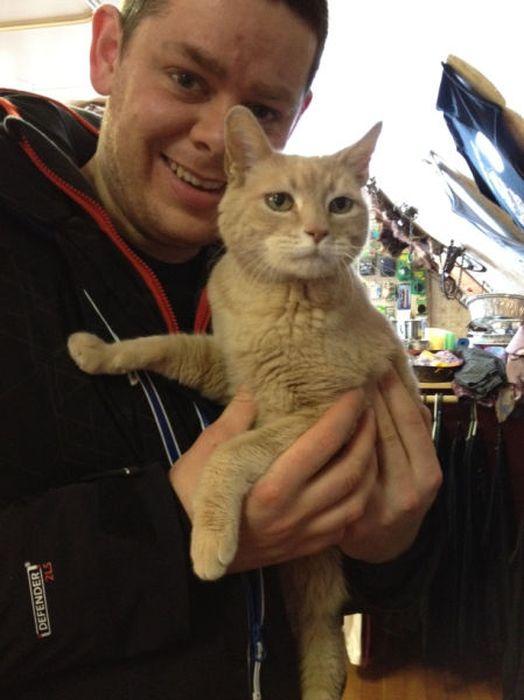 O prefeito da cidade de Talkeetna, no Alasca, é um gatinho 04