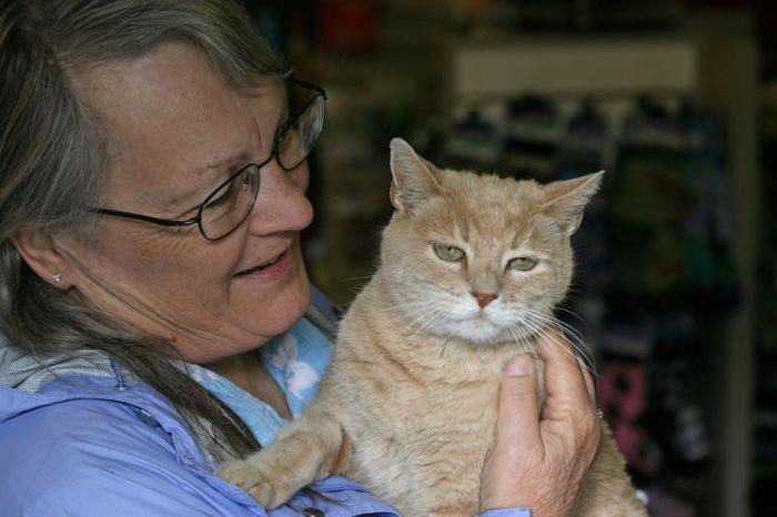 O prefeito da cidade de Talkeetna, no Alasca, é um gatinho 05