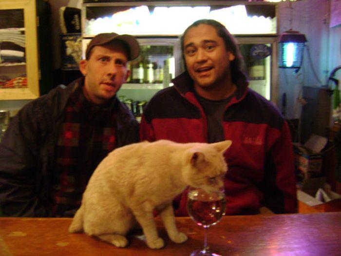 O prefeito da cidade de Talkeetna, no Alasca, é um gatinho 06
