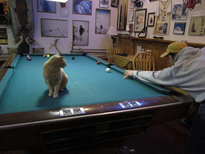 O prefeito da cidade de Talkeetna, no Alasca, é um gatinho 08