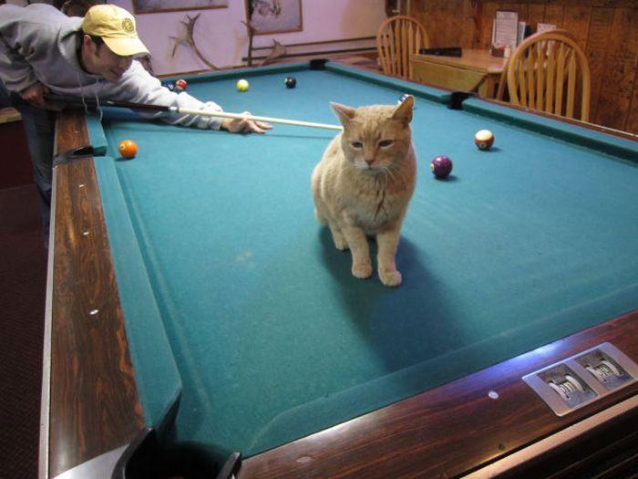 O prefeito da cidade de Talkeetna, no Alasca, é um gatinho 09