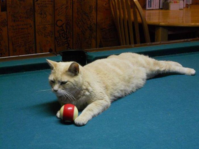 O prefeito da cidade de Talkeetna, no Alasca, é um gatinho 10