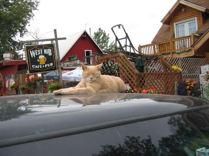 O prefeito da cidade de Talkeetna, no Alasca, é um gatinho 11