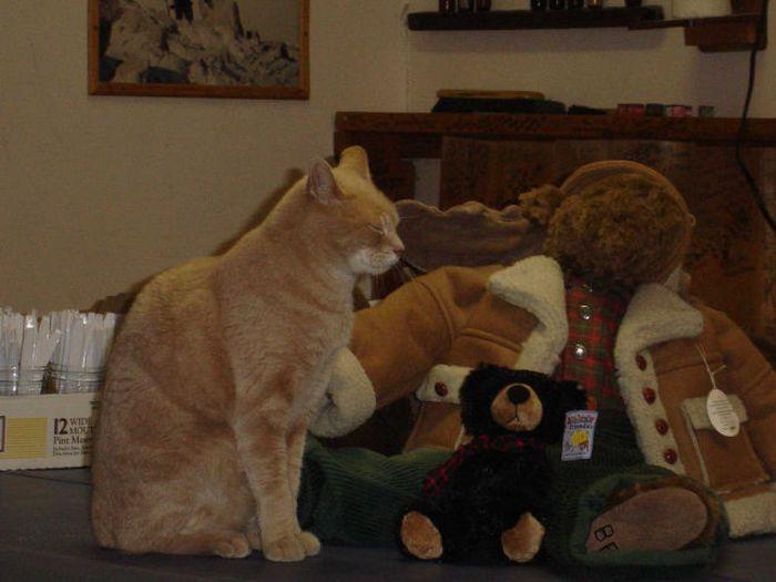 O prefeito da cidade de Talkeetna, no Alasca, é um gatinho 13