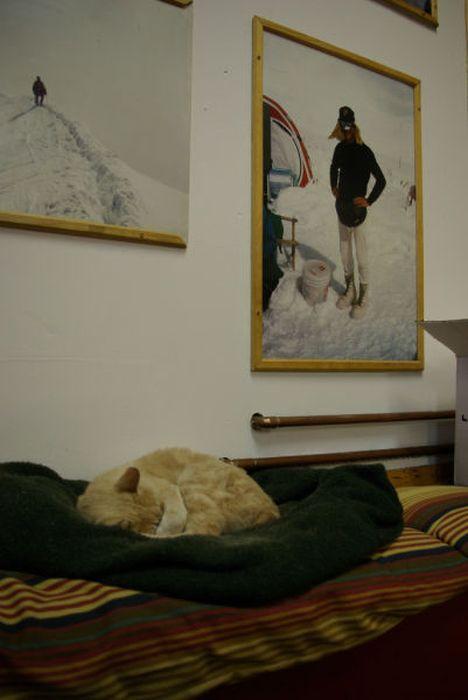O prefeito da cidade de Talkeetna, no Alasca, é um gatinho 14