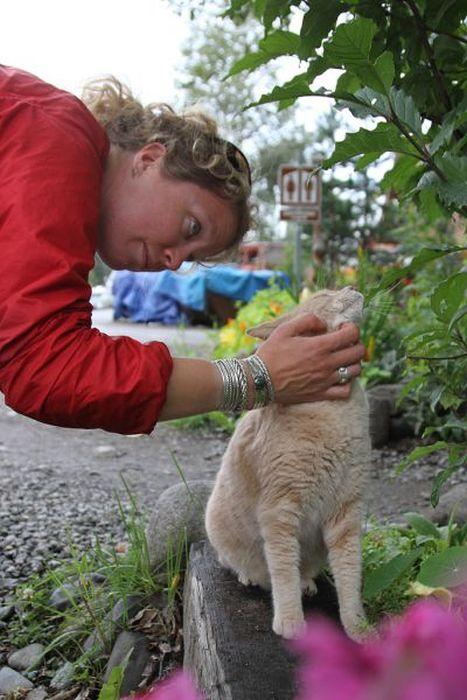 O prefeito da cidade de Talkeetna, no Alasca, é um gatinho 15