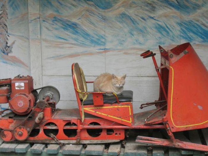 O prefeito da cidade de Talkeetna, no Alasca, é um gatinho 17