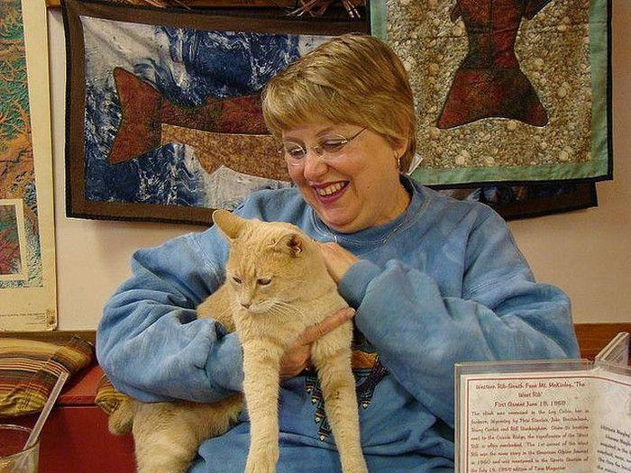 O prefeito da cidade de Talkeetna, no Alasca, é um gatinho 18