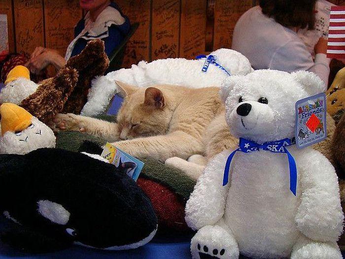 O prefeito da cidade de Talkeetna, no Alasca, é um gatinho 19
