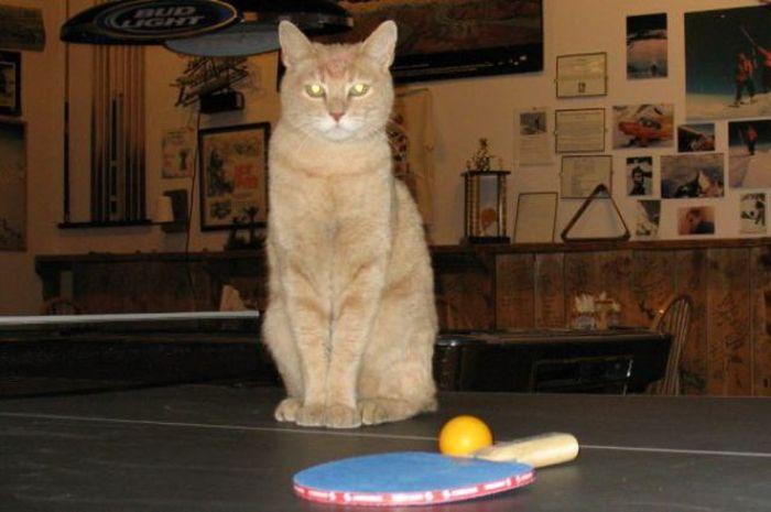 O prefeito da cidade de Talkeetna, no Alasca, é um gatinho 22