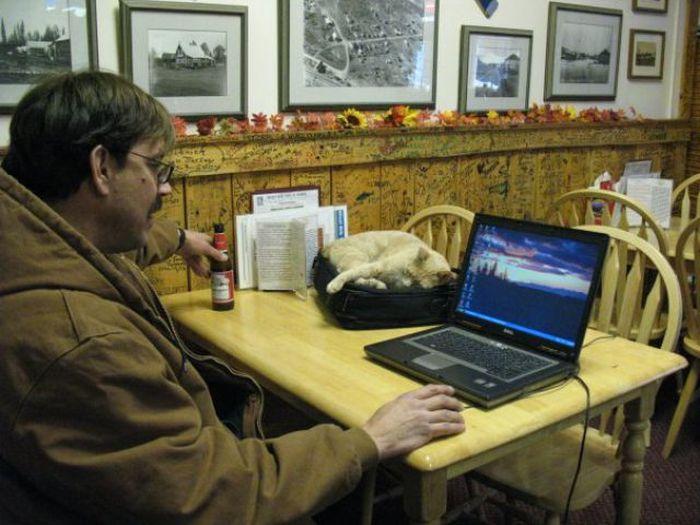 O prefeito da cidade de Talkeetna, no Alasca, é um gatinho 23