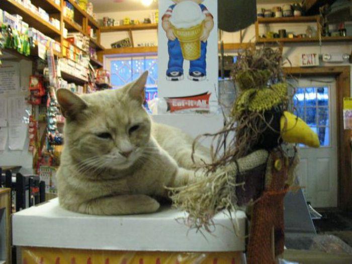 O prefeito da cidade de Talkeetna, no Alasca, é um gatinho 25