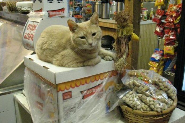 O prefeito da cidade de Talkeetna, no Alasca, é um gatinho 26