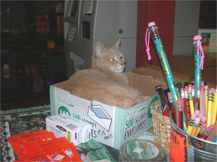 O prefeito da cidade de Talkeetna, no Alasca, é um gatinho 27