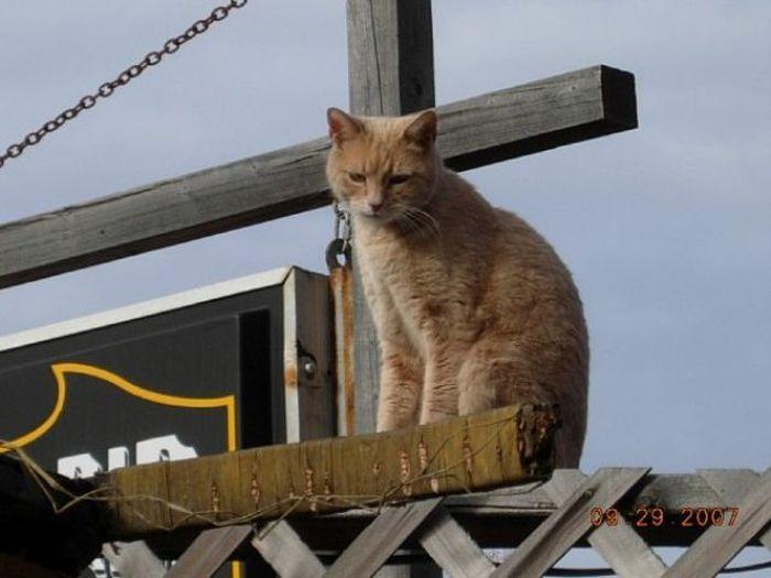 O prefeito da cidade de Talkeetna, no Alasca, é um gatinho 28