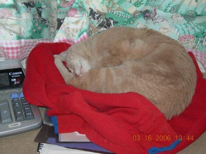O prefeito da cidade de Talkeetna, no Alasca, é um gatinho 29