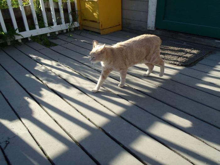 O prefeito da cidade de Talkeetna, no Alasca, é um gatinho 30