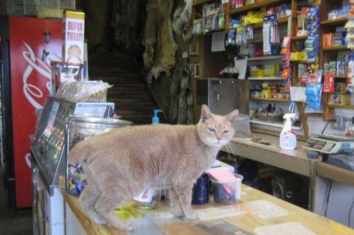 O prefeito da cidade de Talkeetna, no Alasca, é um gatinho 31