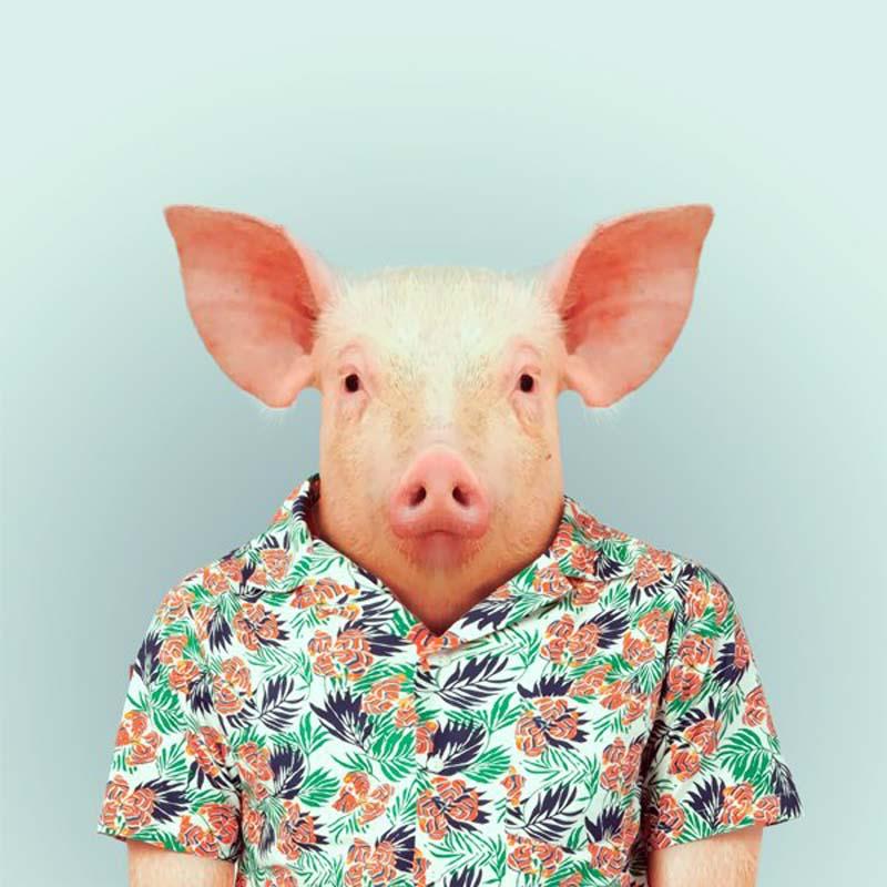 Engraçados retratos de animais vestidos como seres humanos 02
