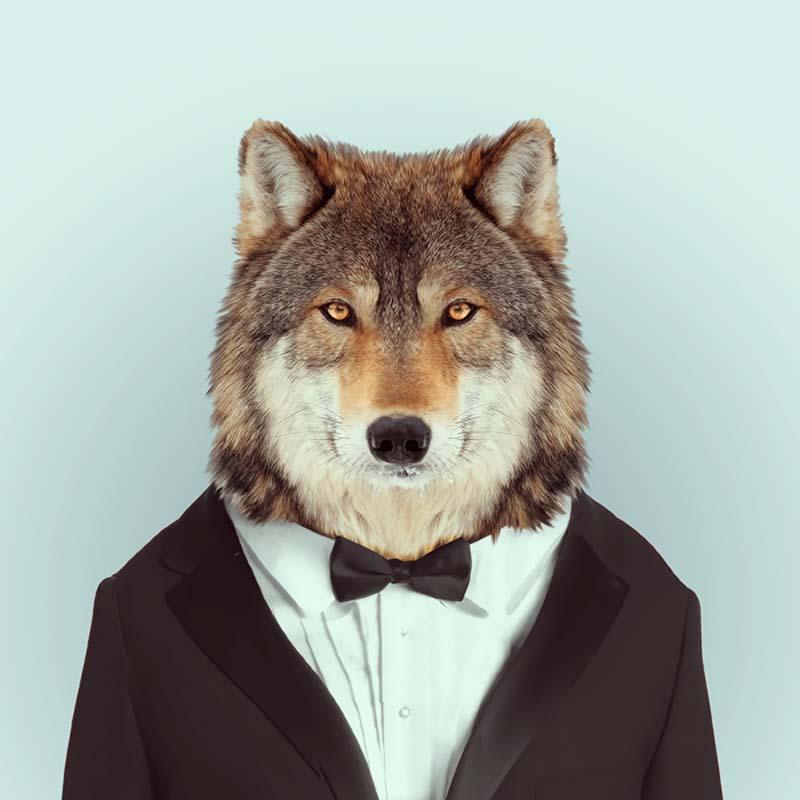 Engraçados retratos de animais vestidos como seres humanos 03