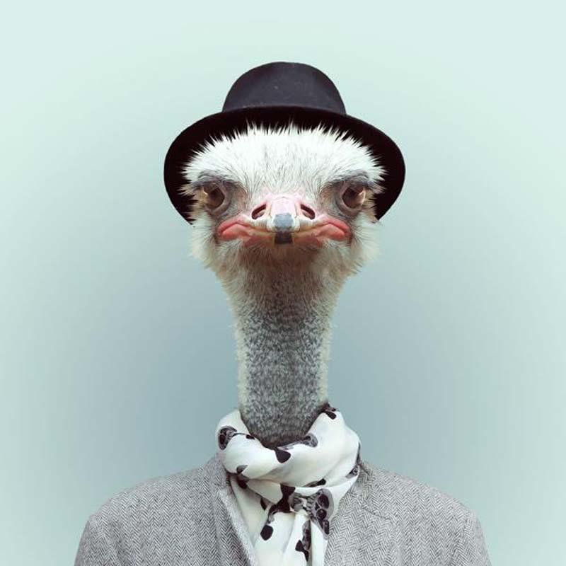 Engraçados retratos de animais vestidos como seres humanos 04