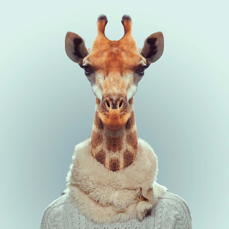 Engraçados retratos de animais vestidos como seres humanos 06