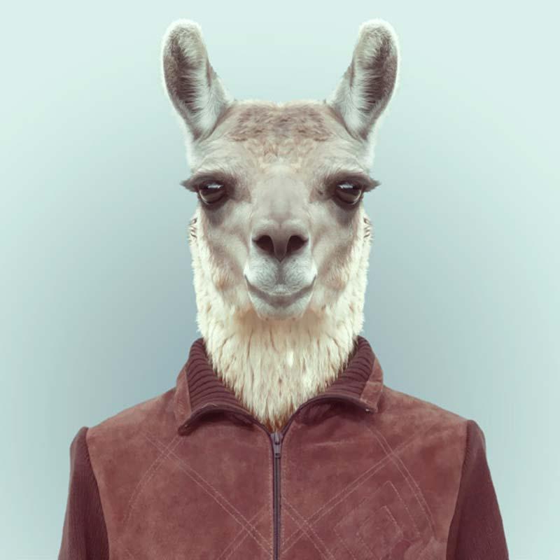 Engraçados retratos de animais vestidos como seres humanos 08