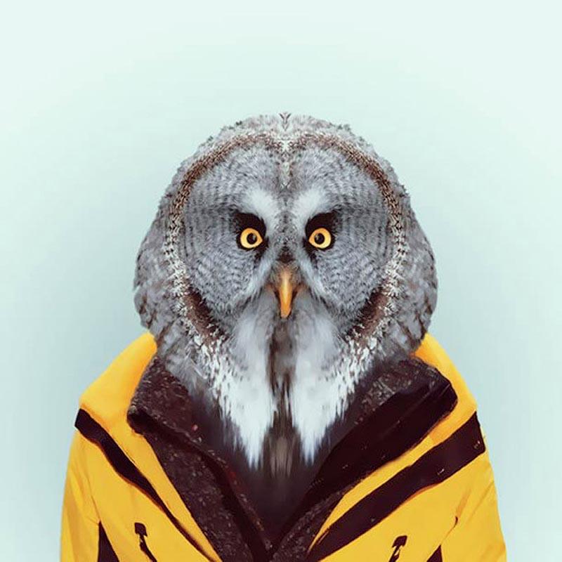 Engraçados retratos de animais vestidos como seres humanos 11