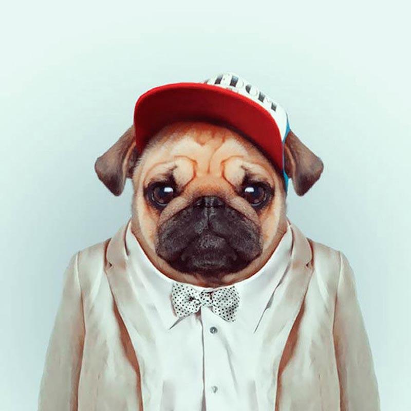 Engraçados retratos de animais vestidos como seres humanos 12