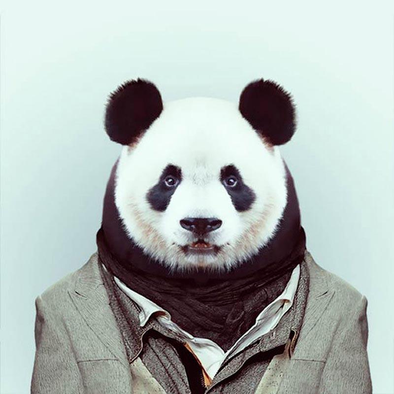 Engraçados retratos de animais vestidos como seres humanos 13