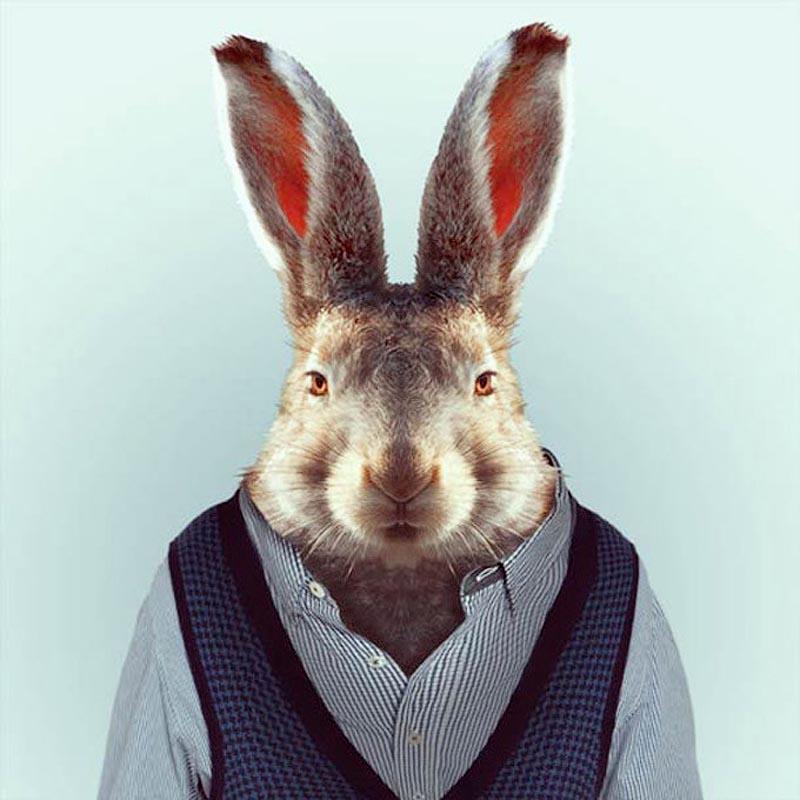 Engraçados retratos de animais vestidos como seres humanos 18