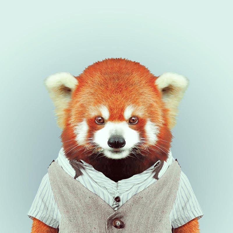 Engraçados retratos de animais vestidos como seres humanos 22