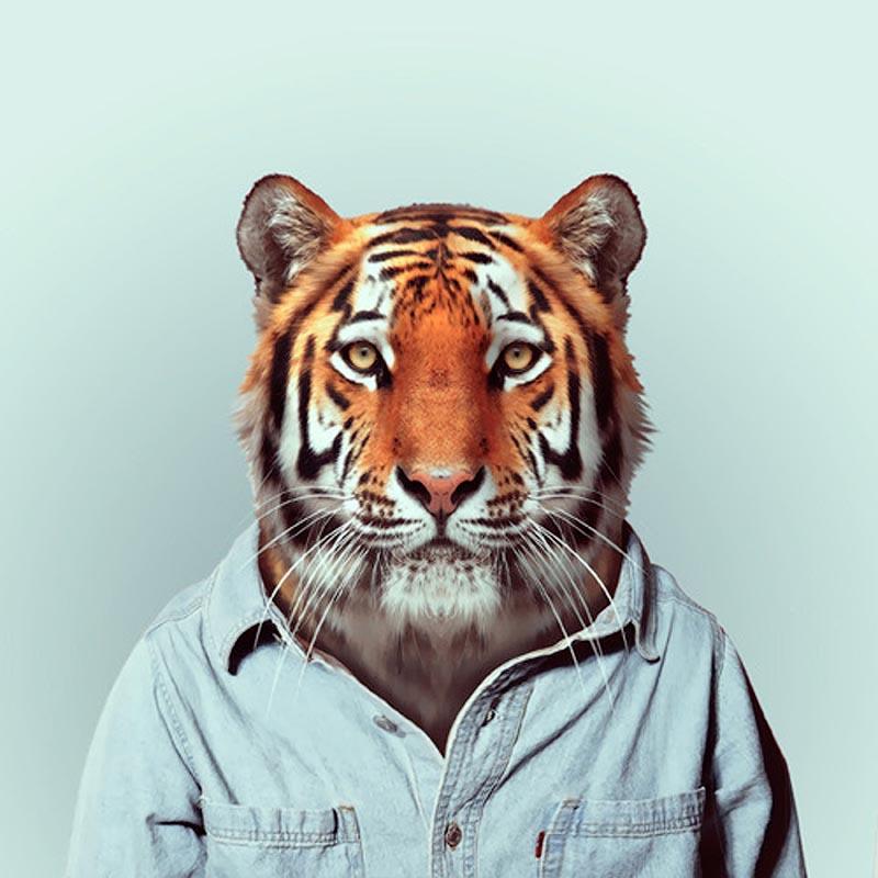 Engraçados retratos de animais vestidos como seres humanos 23