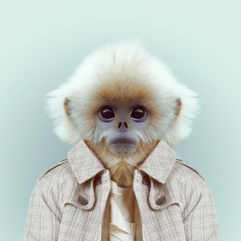 Engraçados retratos de animais vestidos como seres humanos 25