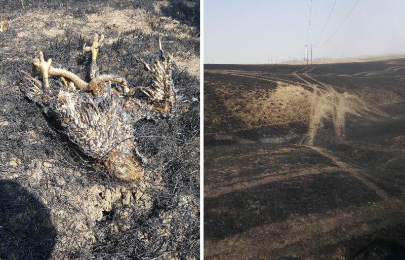 Sabe como uma cobra e uma águia causaram um dos piores incêndios florestais do ano nos EUA?