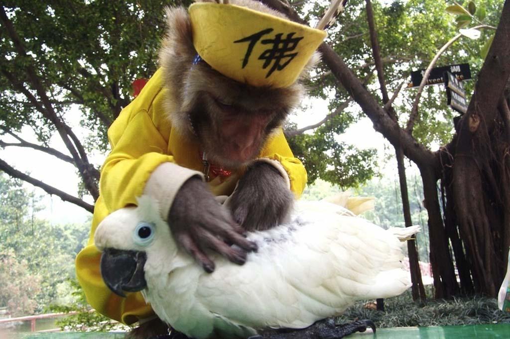 Amizades animais incomuns 2 02