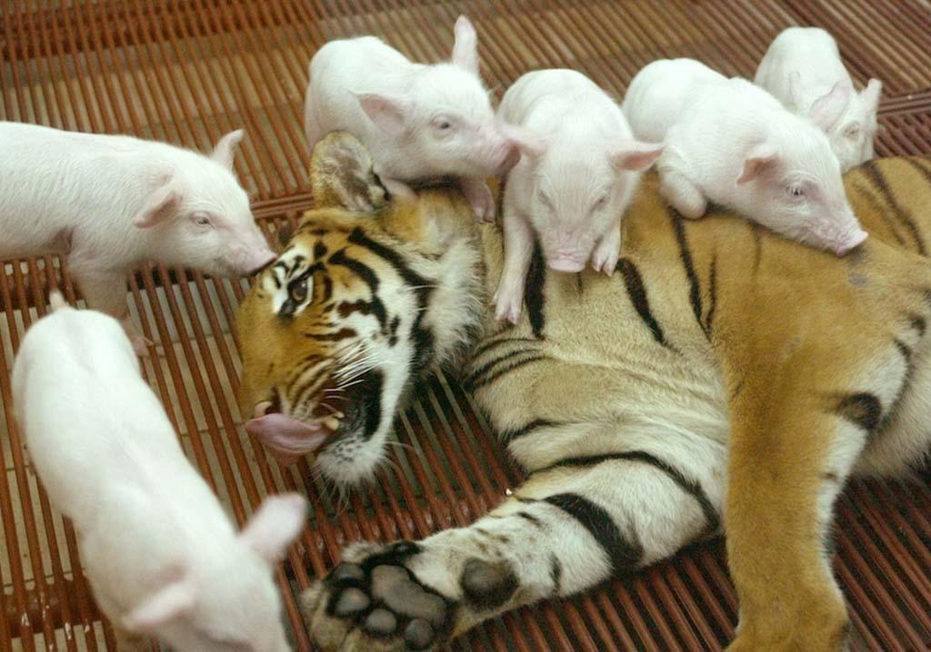 Amizades animais incomuns 2 03