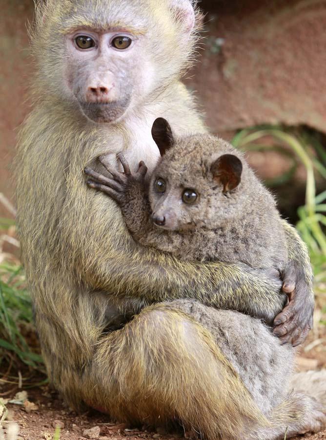 Amizades animais incomuns 2 04
