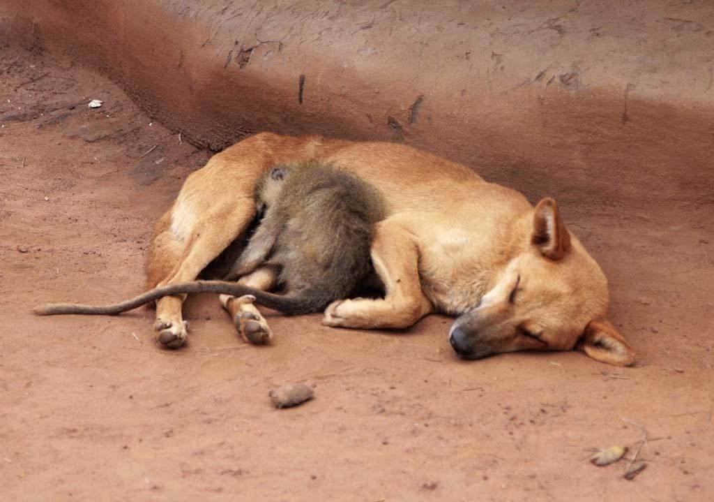 Amizades animais incomuns 2 05