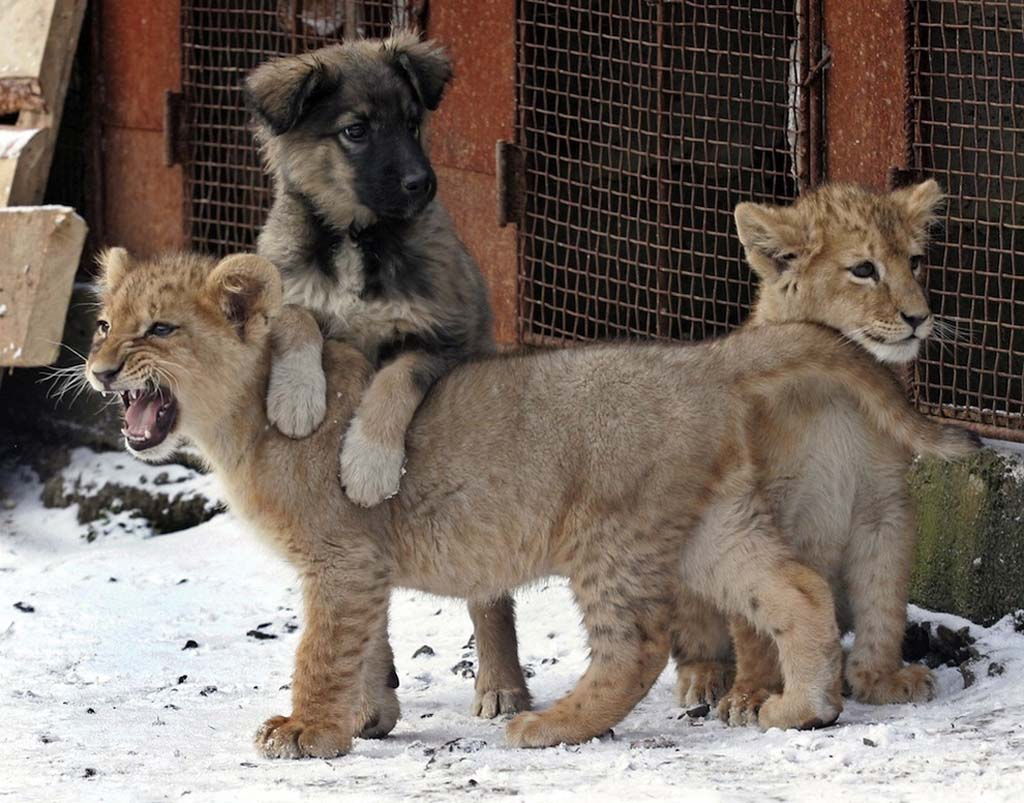 Amizades animais incomuns 2 06