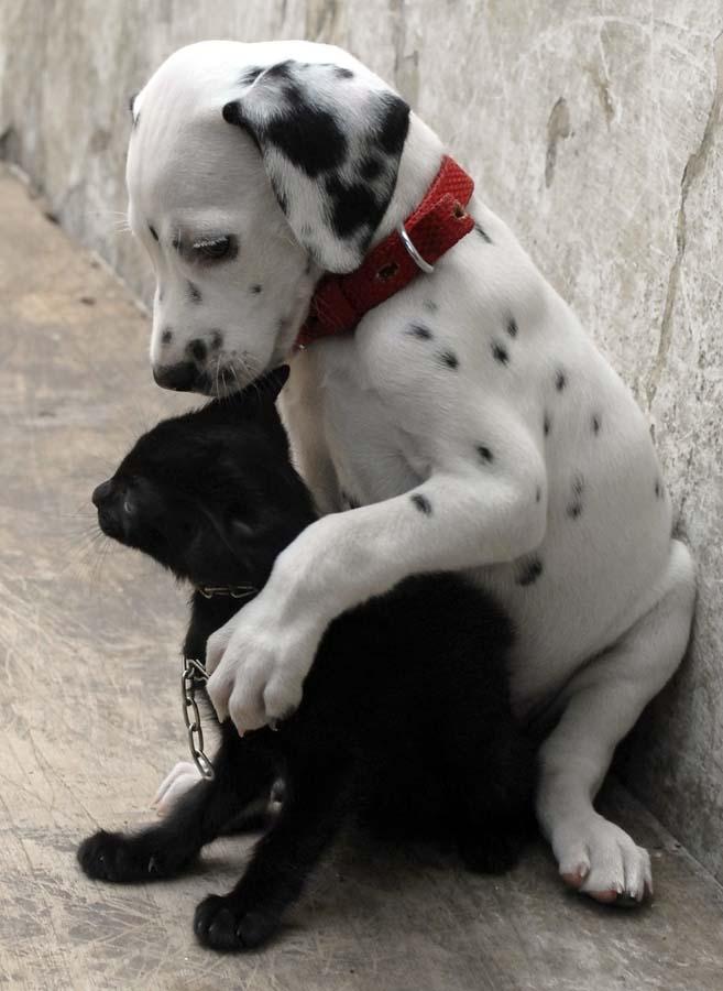 Amizades animais incomuns 2 07