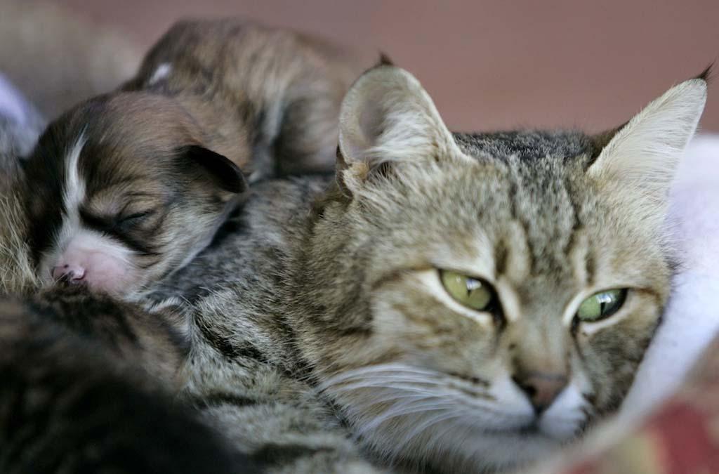 Amizades animais incomuns 2 08