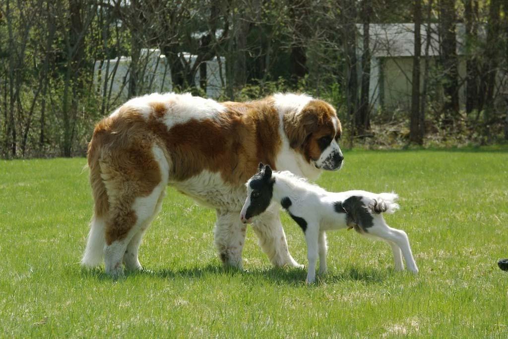 Amizades animais incomuns 2 10
