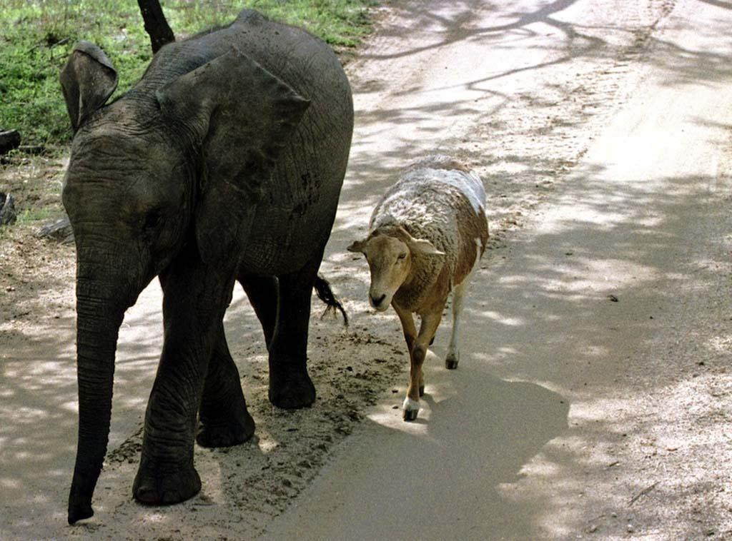 Amizades animais incomuns 2 11