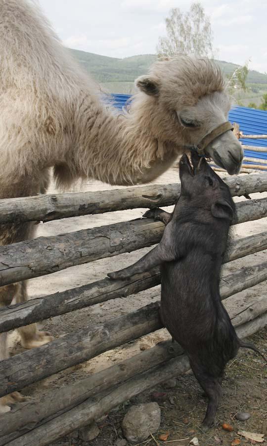 Amizades animais incomuns 2 13