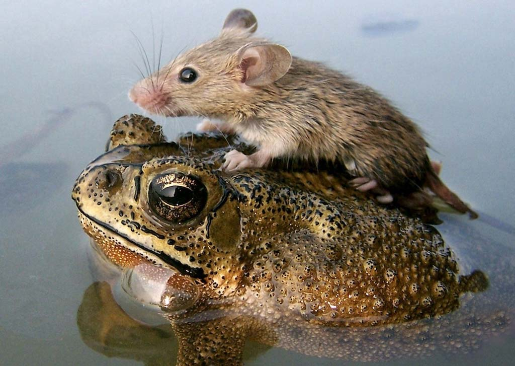Amizades animais incomuns 2 15