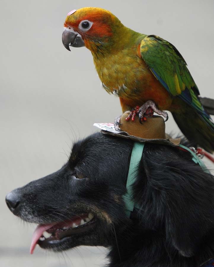 Amizades animais incomuns 2 16