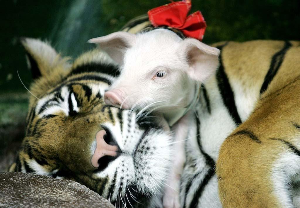 Amizades animais incomuns 2 17
